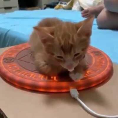 Summoning the powerful kitty spirit