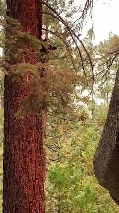 Black bear sighting in Yosemite