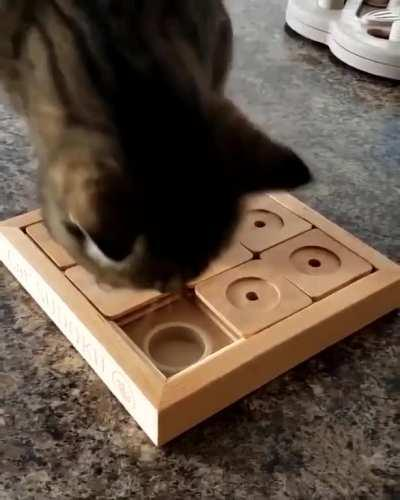 A pretty cool game to play with your cat