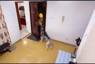 Huskies receive delivery food