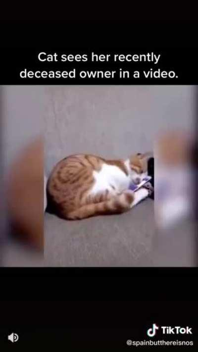 ''Cat sees her recently deceased owner in a video''