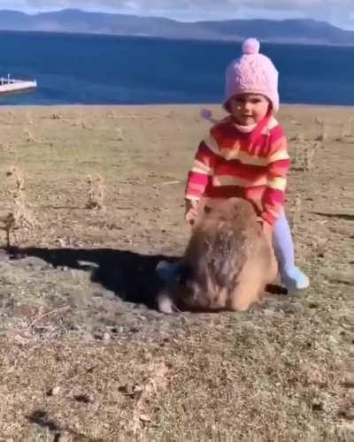 Wombat with a little girl😍