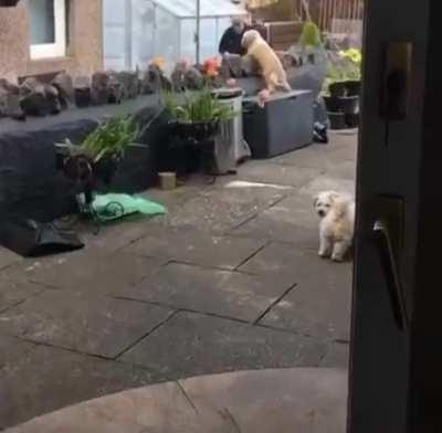 This pupper absolutely adores the old man living next door and will constantly wait at the window to see if he's around