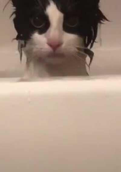 Take a bath, they said. It will be fun, they said