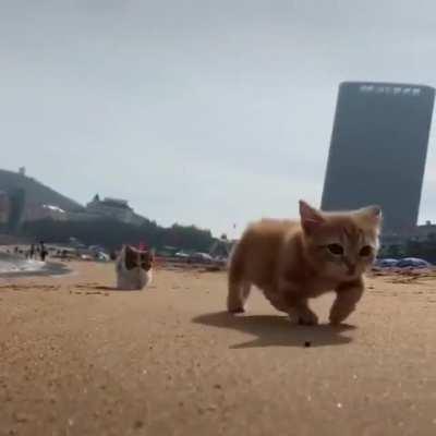Kittens on the beach