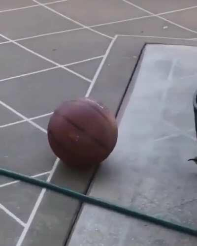 This bird playing with a basketball just for the fun of it