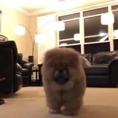 Vicious bear attack