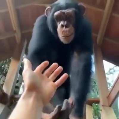 Monkeybro helps out