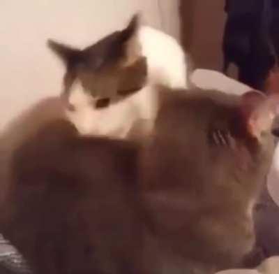 Cats be wildin