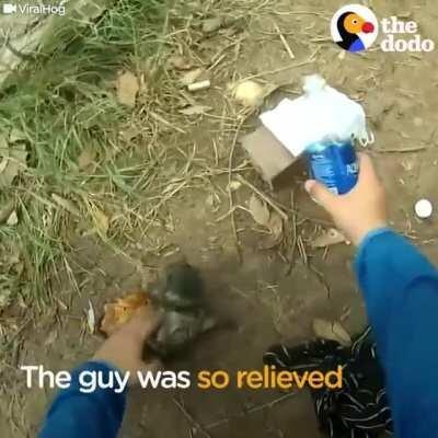 Man Gives Drowning Puppy CPR