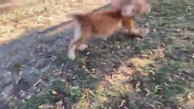 Blind dog sniffs his owner and gets excited