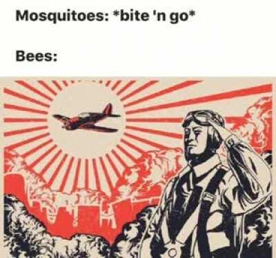 I follow the rules, so here's a random meme I have on my hardrive.