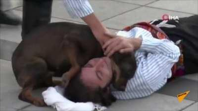 Stray dogs interrupts a street performance thinks the man was wounded.