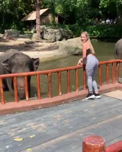 Connie Talbot feeding an Elephant