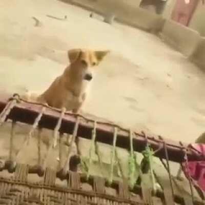 Nigga dog