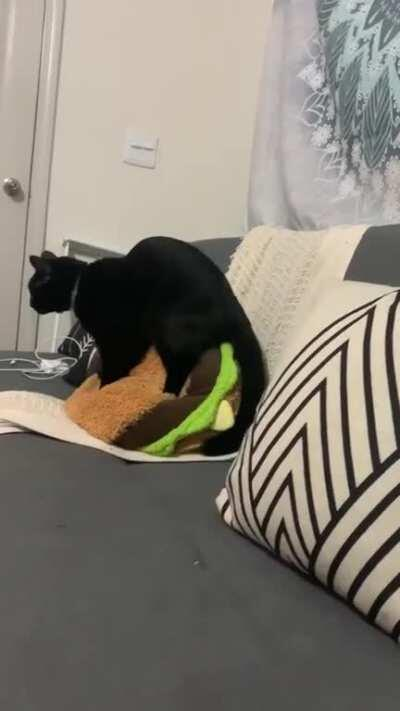 Two paws isn't enough for this kneady cat