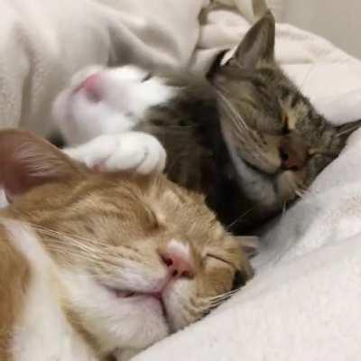 Cuteness under the blanket