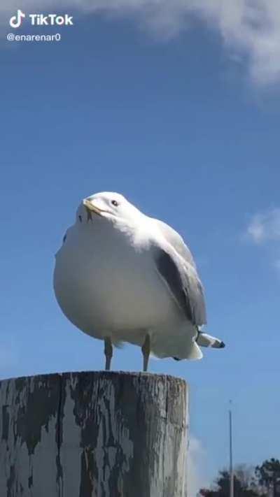 What an interesting bird