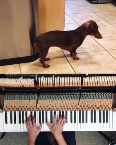 Found it on reddit, added some piano.