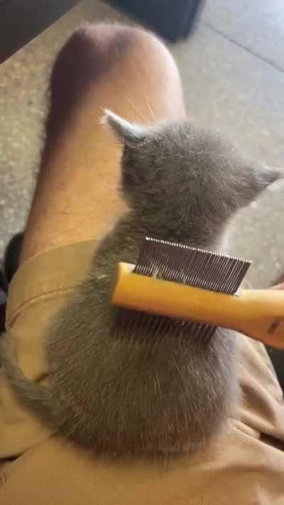 Fuzzy wee one gets a brushin'