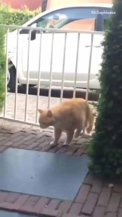 Fat Cat VS Gate