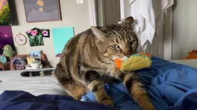 My roommates chonker tirelessly spends all day makin' muffins. He loves that fish taco toy 🌮