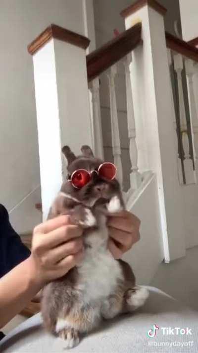 Smooth Bunny