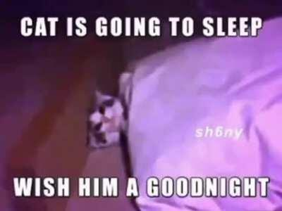 say goodnight to the cat please