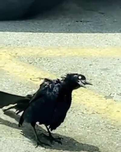 I think bird is on crack!