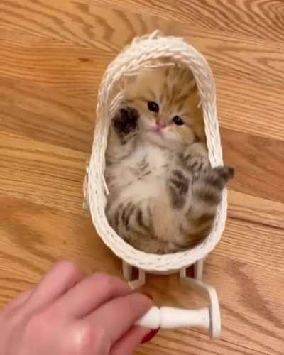 Treat your cat like a baby