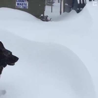 German Shepherd rescues Friend Stuck In Snow
