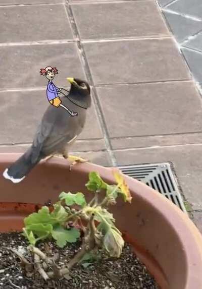 Boris has a new bird