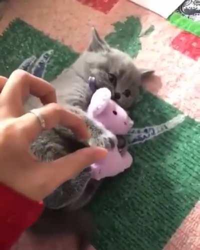 Let the cat have their toy