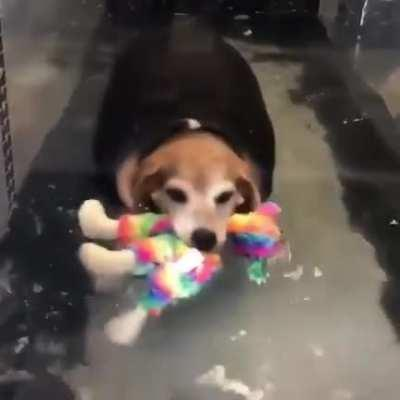 Rescue chonk keeps his toy together while exercising