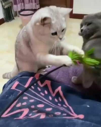 Cats punching
