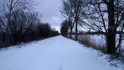 Ein paar Rehe im Schnee