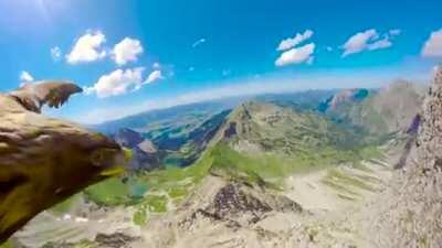 Watch this eagle fly over the Alps: