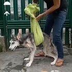 Dog being saved