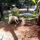 Chained Dog vs Cat