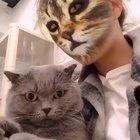 Cats reacting to cat filters