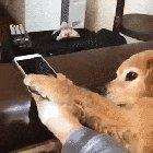 Pupper prevents owner from going online to harmful social media