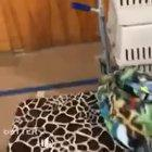 This parrot sounds just like a crying baby
