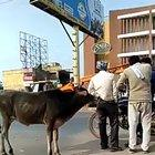 Just another normal day in India
