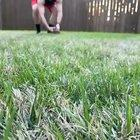 Mini dachshund, incoming!