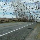 Tumbleweed Tornado in Washington