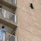 This cat stuck on a building managed to sort itself out. They truly are immortal.