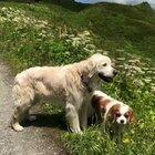 Taking your dogs for a walk... in Switzerland