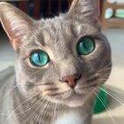 Those emerald eyes! 👀😍