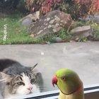 he just wants a friend