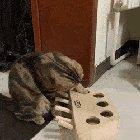 Kitty mind = Blown
